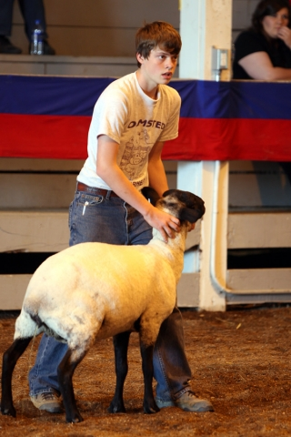 Wool Carding - A 4-H Dare to Explore Event